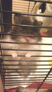 Gestatten, mein Name ist Hamster