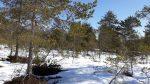 Langlaufen am Wolfgangsee 3