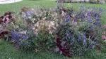 Blumenbeet in blau mit Gräsern